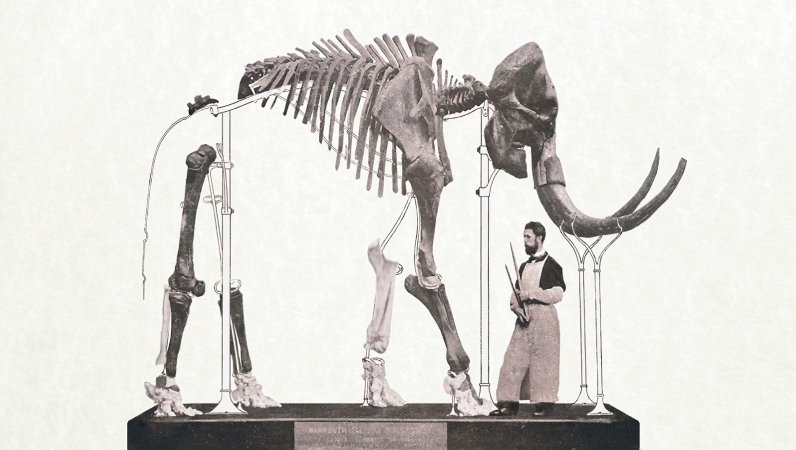 A Tale of Two Mammoths: Paleontologist Mietje Germonpré on 3D Printing a Mammoth