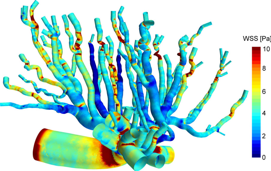 Micro-CT Imaging Reconstructs the Tree of Life: Understanding Placental Blood Flow