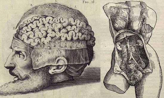 Visualizing the Human Anatomy: 500 Years Since Andreas Vesalius