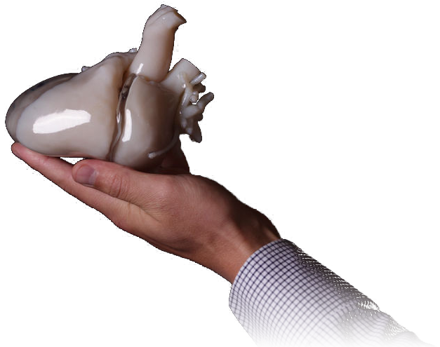 How to create a heart model for 3D Printing | Materialise