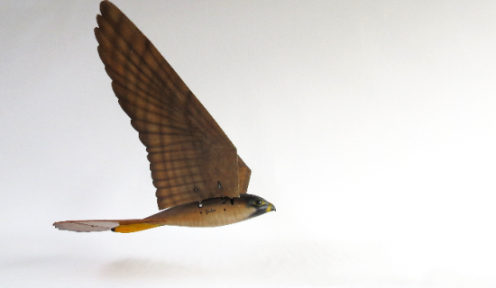 Robirds: 3D Printing Spreads Its Wings