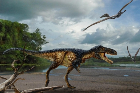 A reimagining of the new tyrannosaur Timurlengia euotica © Scientific American; original painting by Todd Marshall