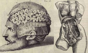 Anatomical drawings by Vesalius