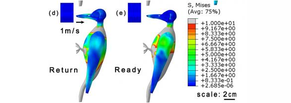 How 3D Models of Woodpecker Anatomy Can Further Anti-Shock Device Design