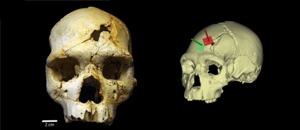 Investigating a 435,000-Year-Old Murder with 3D Analysis